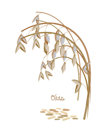 bakery products: Cereals, legumes, plants. Spikelet oats with leaves, stems and grains.