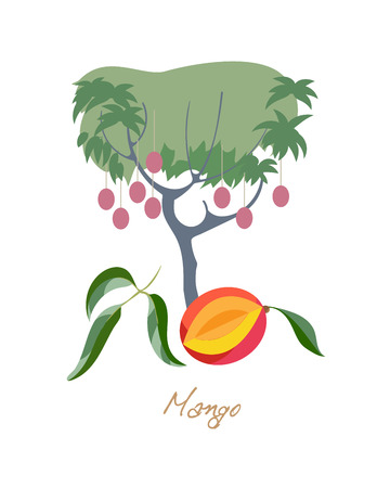 Mango fetus with leafs. Food and ingredients for cooking. Harvest. Illustration