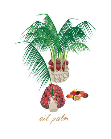 Hermosa Palma de aceite tropical con hojas, flores y frutas. Foto de archivo - 83212495