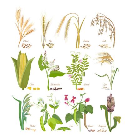 나뭇잎과 꽃과 곡물 및 콩과 식물의 집합입니다.