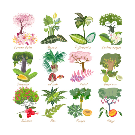 Set of modern tropical palm plants with leaves, flowers. Illustration