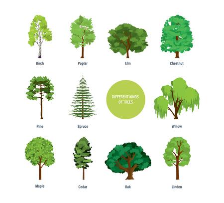 concepto de colección de diferentes tipos modernos de árboles .