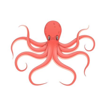 Colorful red octopus animal in a water fauna vector illustration