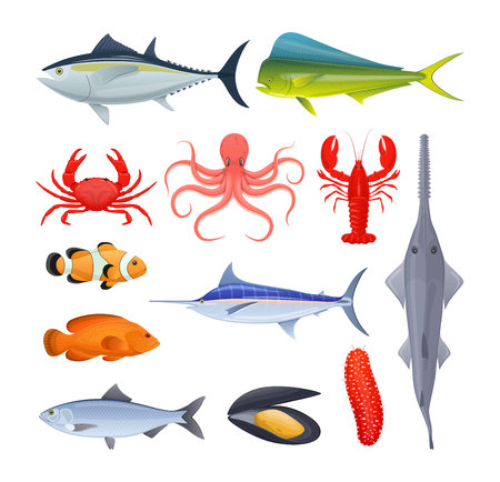 Set of sea river fish different kinds of seafood collection vector illustration Illustration