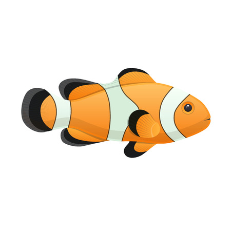 Colorful sea clown fish aquarium decorative vector illustration Ilustracja