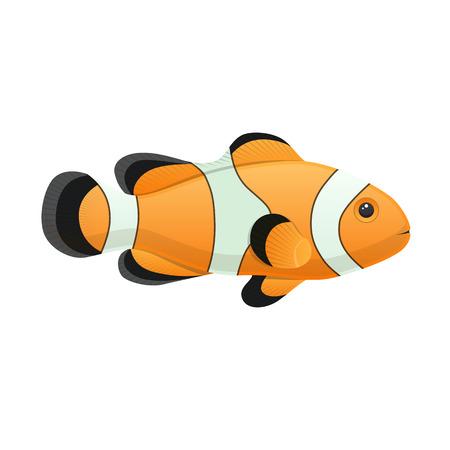 Colorful sea clown fish aquarium decorative vector illustration Vettoriali