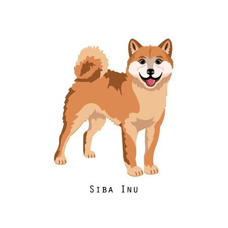 Furry human friend, home animal and decorative dog: shiba inu.