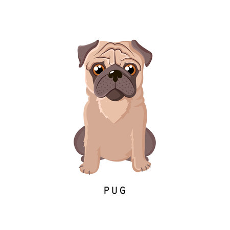 Furry human friend, home animal and decorative dog: fluffy pug.