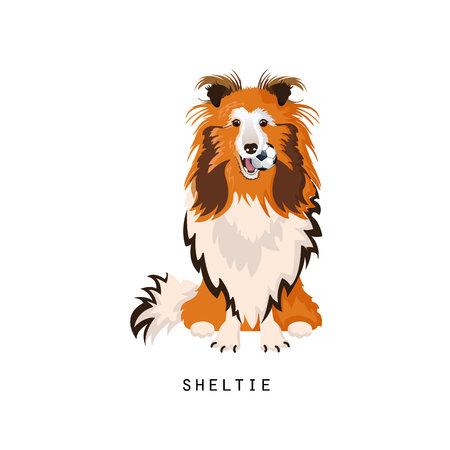 Sheltie, 집 애완 동물. 셰틀 랜드 제도 몰이 또는 셰틀 랜드 제도 collie, 충실 한 개. 일러스트
