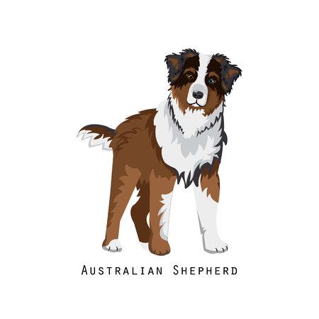 Bont menselijke vriend, huisdier en decoratieve hond: Australische herder.
