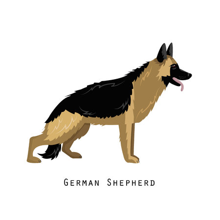 Furry human friend, home animal and decorative dog: german shepherd.