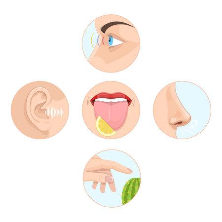 Set von fünf Sinnen des Menschen. Anatomie der menschlichen Organe. Vektorgrafik