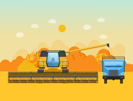 Autumn harvesting in the field. Agricultural machinery, machines for harvesting, processing of grain. Agro-industrial complex, grain-harvesting tractor, combine for farm lands. Vector illustration.