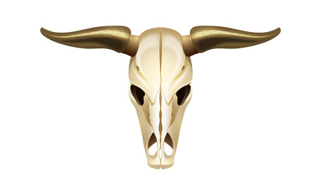 Skull of a cow head, front view. Concept of the wild west, hunting for animals, the object atmosphere of the surrounding environment of emptiness. Vector illustration.