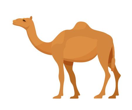 Egyptian camel in full growth. Large animal from arid desert, semi-desert, steppes. Mammal, camel family, animal with hooves. Vector illustration isolated.