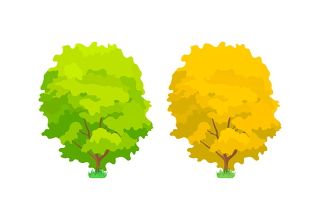 Cartoon colorful oak trees. Cute woody plants, green and yellow eco oak trees in summer and autumn seasons. Ecology, pure nature, environmental garden forest landscape. Vector illustration. 向量圖像