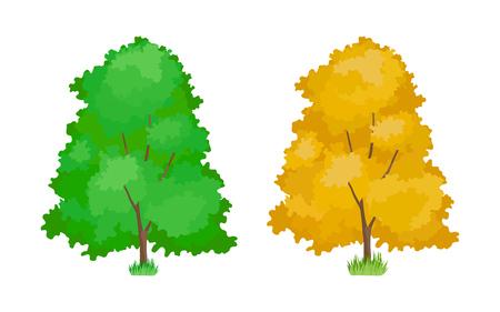 Dessin animé de trembles colorés. Plantes ligneuses mignonnes, trembles écologiques verts et jaunes en été et en automne. Écologie, nature pure, paysage forestier de jardin environnemental. Illustration vectorielle.