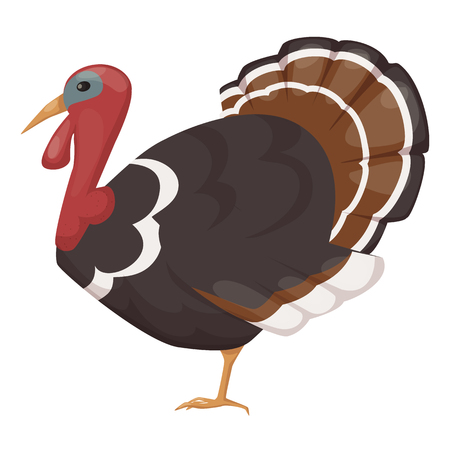 Cute, funny, pet, bird turkey. Large chicken bird from the genus of turkeys, family of pheasants, incubating and bringing eggs. Farm, agricultural animal with feathers. Cartoon vector.