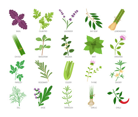 Set of culinary herbs and spices for cooking, eating, food.