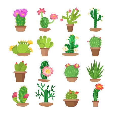 Colorful set of bright home blooming cacti in pots.