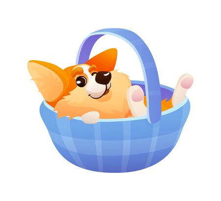 Emotional cute corgi dog lying in a basket.