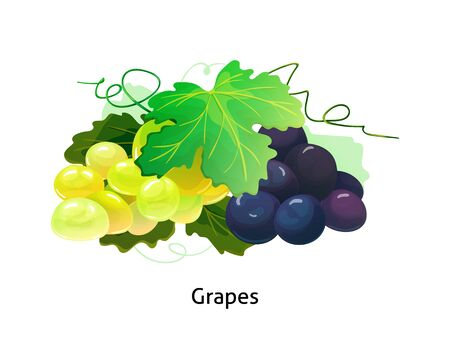 Purple and yellow table, wine grapes with stem and leaf