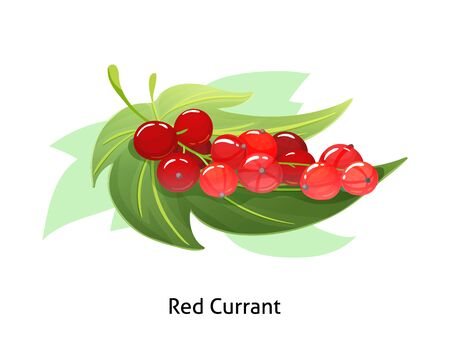 Red currant berries with leaf on white background. Vektorgrafik
