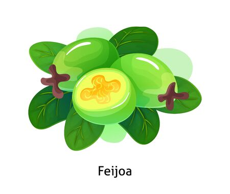 Feijoa berries with leaf on white background.