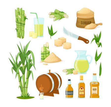 Cane sugar with stem and leaf plants vector cartoon illustration