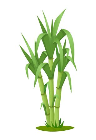 Sugarcane plant with stem and leaf isolated vector