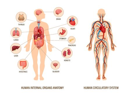 Human body anatomy infographic of structure of human organs Ilustrace