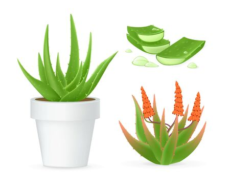 Aloe vera realistic set with fresh drops of water