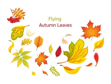 Colored isolated autumn elements fall leaves vector