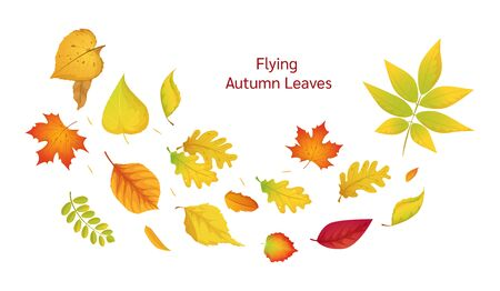 Colored isolated autumn elements fall leaves vector Illustration