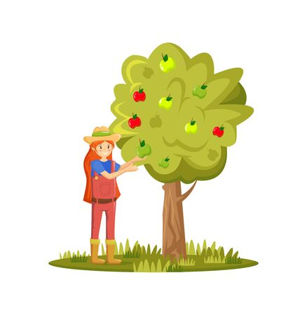 Farmers and agricultural work characters. Girl picks apples in garden. Female working in fields, gathering harvest, picking ripe organic apples in basket. Agricultural gardener. Vector illustration.
