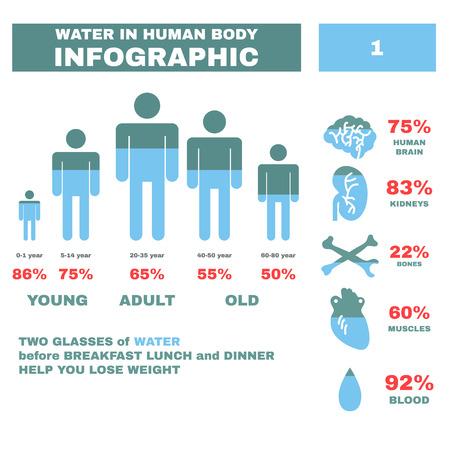 cuerpo humano: Agua en Hyman cuerpo Infograf�a. Ilustraci�n vectorial