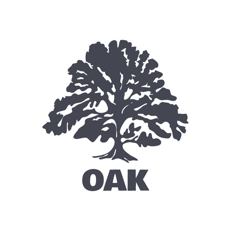 roble arbol: Oak Tree Logotipo de la silueta aislado. Ilustración vectorial