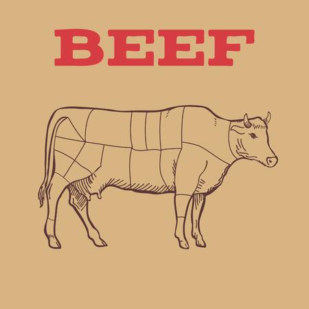 Scheme of Beef cuts isolated. Vector illustration Stock Illustratie