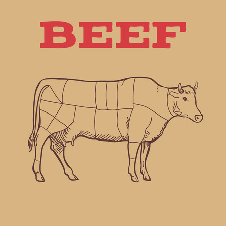 Scheme of Beef cuts isolated. Vector illustration Ilustração