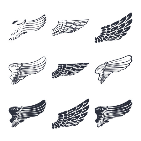 wings icon: Set of wings isolated on white vector illustration