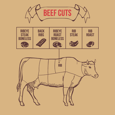 flank: Vintage butcher cuts of beef scheme vector illustration Vettoriali
