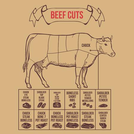 cut short: Vintage butcher cuts of beef scheme vector illustration Illustration