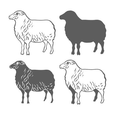 domestic animal: Domestic Animal Sheep Design Elements Vector Illustration