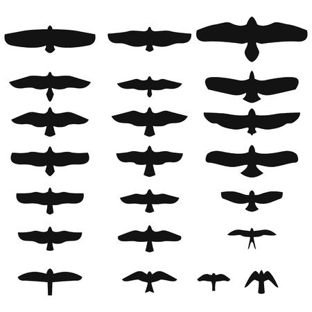 birds of prey: Set of Silhouettes of birds of prey