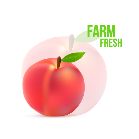 fruited: Ripe peach with a green leaf on a white background  Illustration