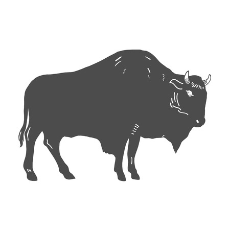 Hand Drawn Buffalo Illustration isolated on white. Vector illustration
