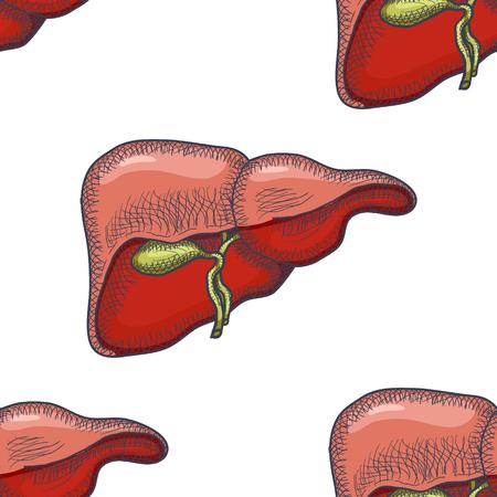 Sketch Ink Human liver, hand drawn seamless Pattern Background, Engraved Anatomical illustration. Vector illustration