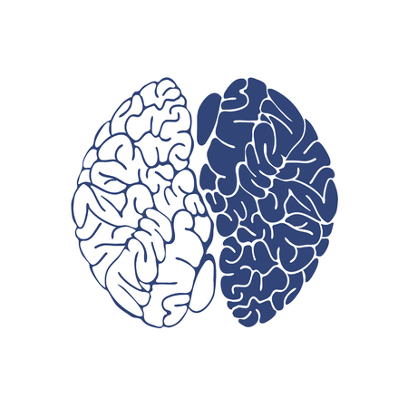 Sketch Ink Human Brain, hand drawn ,Anatomical illustration. Vector illustration