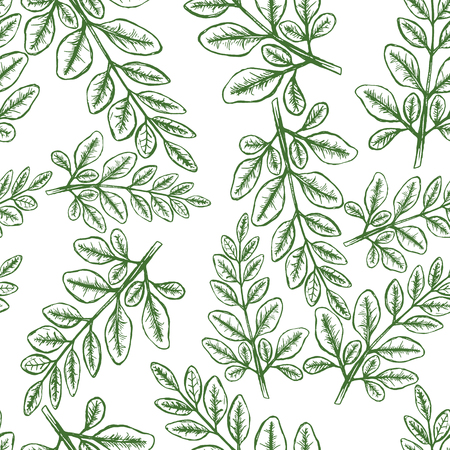 Moringa Leaves Seampless Pattern Background. Vector illustration