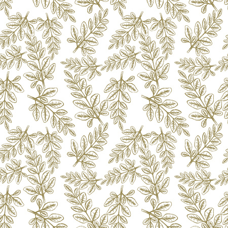 Moringa Leaves Seampless Pattern Background. Vector illustration